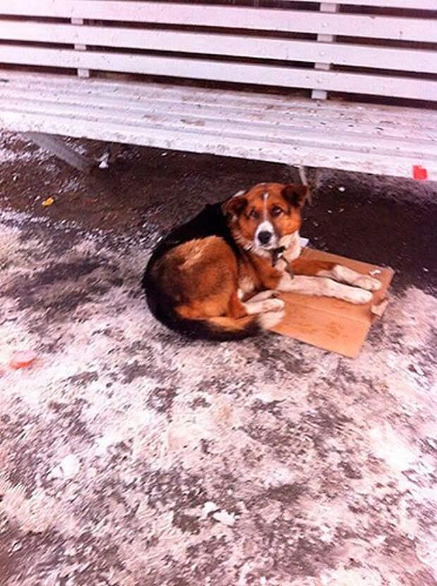 Новый челябинский Хатико: рыжий пес ждет хозяина на остановке уже неделю