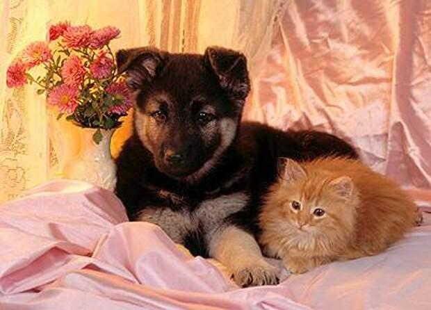 http://www.zooclub.ru/attach/cats/331.jpg
