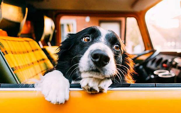 Харизматичная собачка фотографа Эндрю Кнаппа