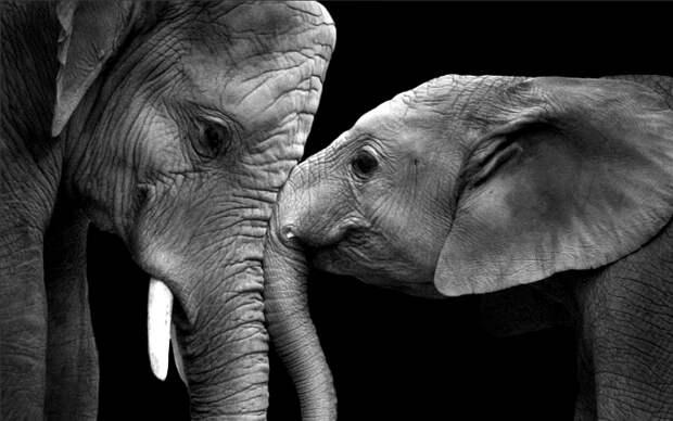 Слоновьей нежности пост