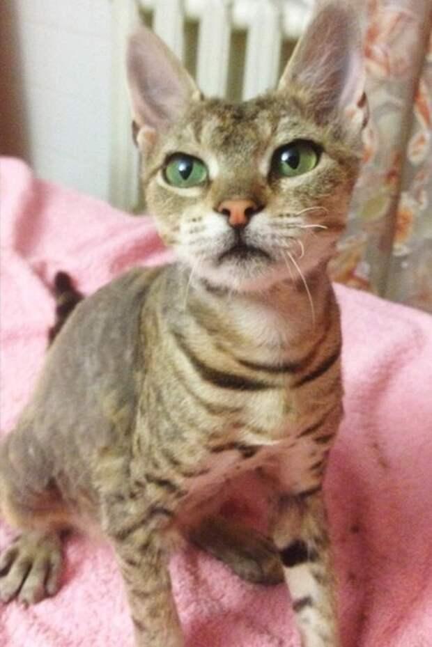 Преображение бездомной кошечки благодаря любви и заботе