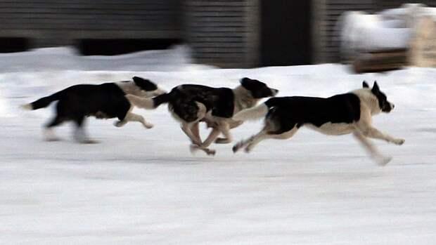 Полиция возбудила уголовное дело после убийства четырех собак под Калугой