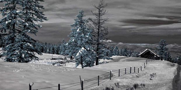 Зима. Инфракрасная фотография