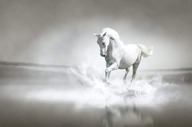 интересное о лошадях