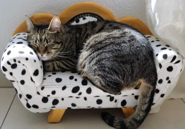 В Удмуртии конкретизировали правила содержания дома кошек, собак и грызунов
