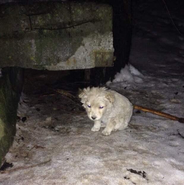 Совсем маленький щенок, дрожа от холода, прятался за огромный бак