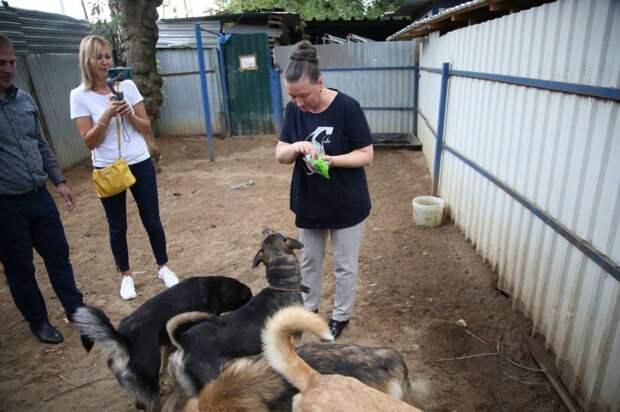 Приюту для животных на Искры подарили корма и игрушки