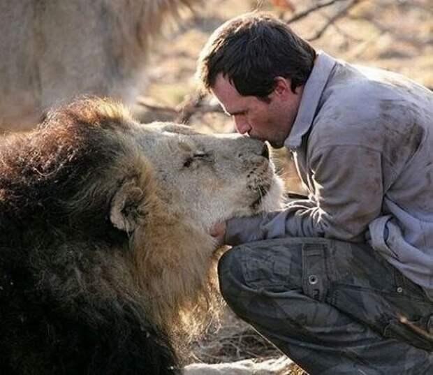 Человек и животные животные, человек