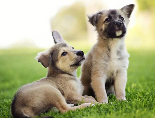 Собака настояла, что нужно забрать брошенных щенков домой