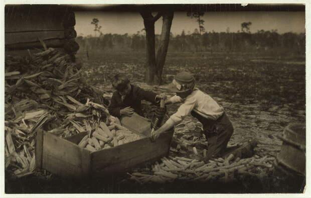 12. Дети чистят кукурузу в учебное время на одной из ферм Дублина, Джорджия. 1915 год. америка, дети, детский труд, история