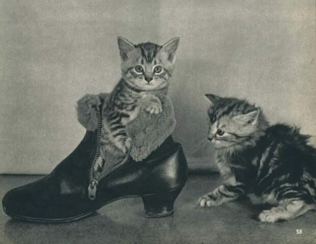 20 котов «доинтернетного» периода, которые запали нам в душу