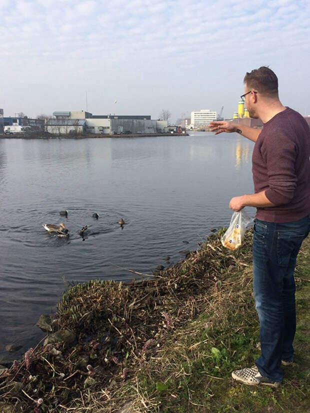 К берегу без мусора стали приплывать птицы.