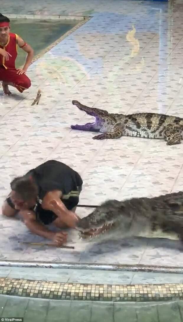 Дрессировщик в Таиланде засунул руку в пасть крокодила - но тот решил сорвать шоу