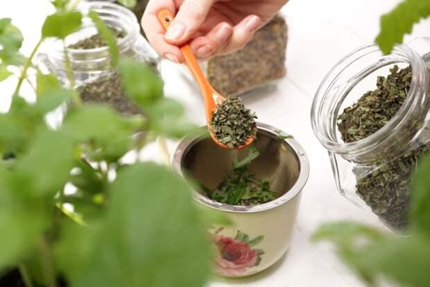 полезные свойства чая из базилика