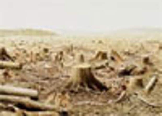 Бангкокский лесоруб эффективнее тунгусского метеорита