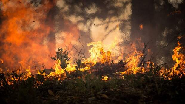 В июле спецпоезда 20 раз выезжали на тушение пожаров в Карелии