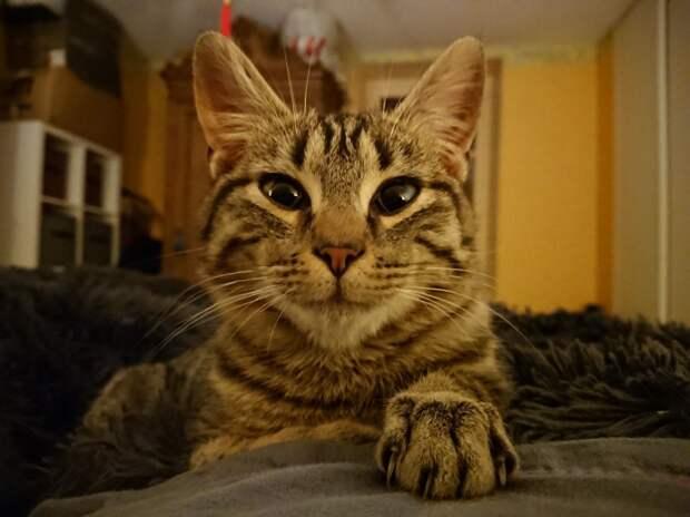 Маленький, уличный и тощий кот твердо решил завести себе парочку людей