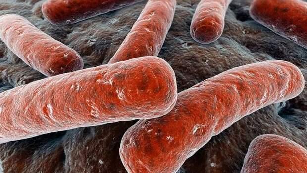 10 самых опасных бактерий