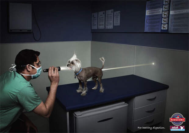 Диета для собак приводит к страшным последствиям