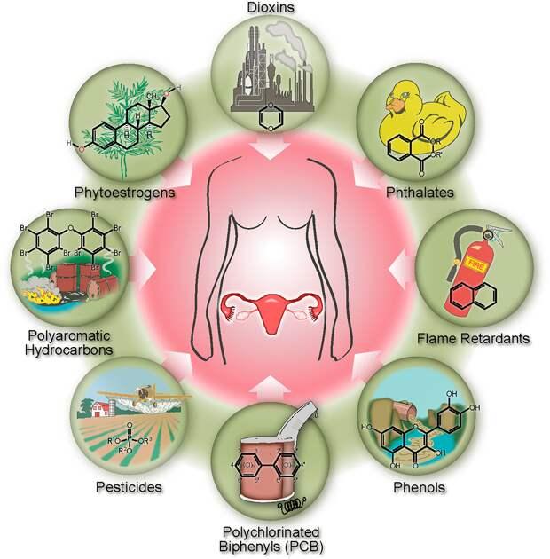 Рисунок 1. Эндокринные разрушители. Сверху, по часовой стрелке: диоксины, фталаты, огнезащитные средства, фенолы, полихлорированные бифенилы (ПХБ), пестициды, полиароматические углеводороды, фитоэстрогены. Источник [1]