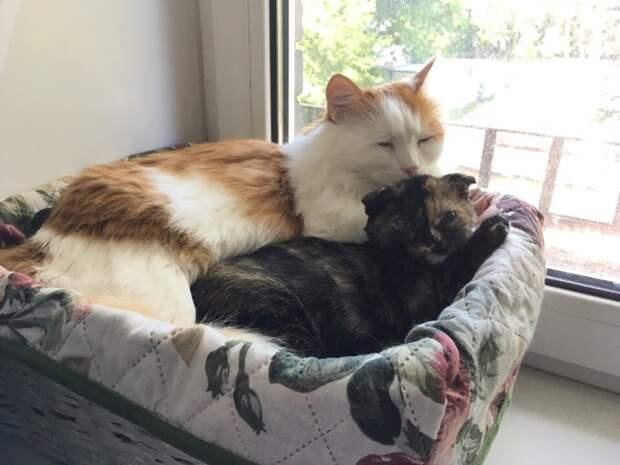 коты у окна
