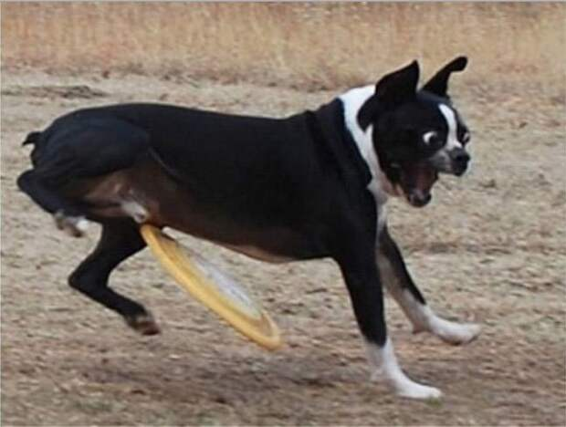 Этот пес больше никогда не будет играть в фрисби момент, подборка, провал