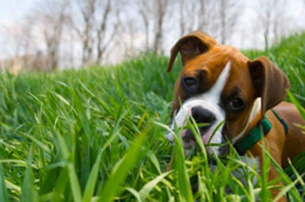 http://www.ecomii.com/blogs/food/files/2010/05/dog-grass.jpg