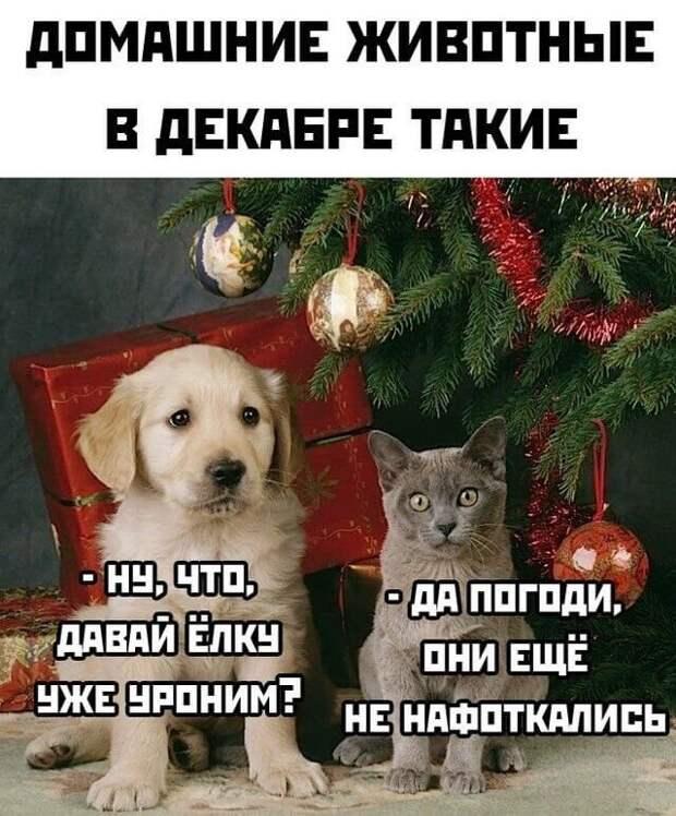 Животные в декабре