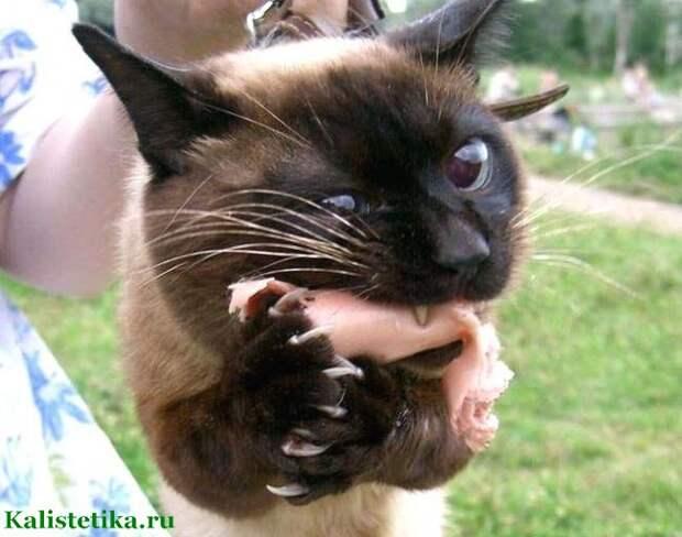 Лапы загребущие: любителям котов