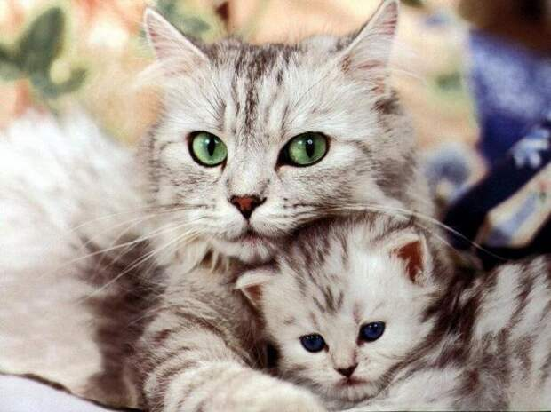 22 Sweet Cat Photos You Can Get from Availing Printing Services Top Design Magazine - Web Design and Digital Content