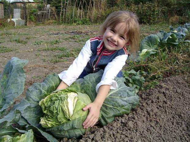 Ценные советы начинающим огородникам