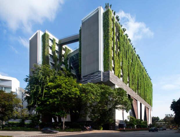 Фасады и крыша комплекса Школы искусств WOHA покрыты буйной зеленью (Сингапур). | Фото: weekend.rambler.ru.