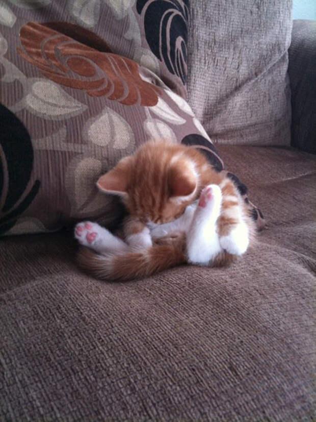25 кошачьих поз для сна