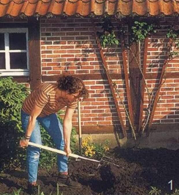 Многолетние садовые цветы для вашей клумбы