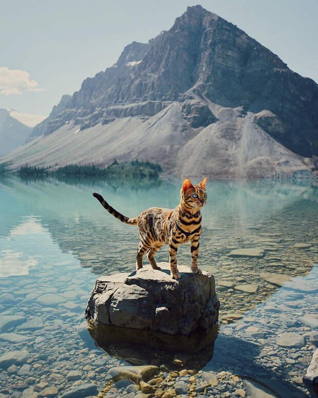 Очаровательная кошка из Канады путешествует со своей хозяйкой по всему миру