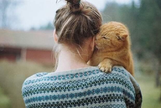 лечение с помощью кошки