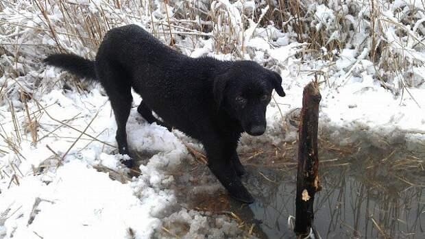 Жительница Ростовской области спасла пса, который три дня просидел в капкане