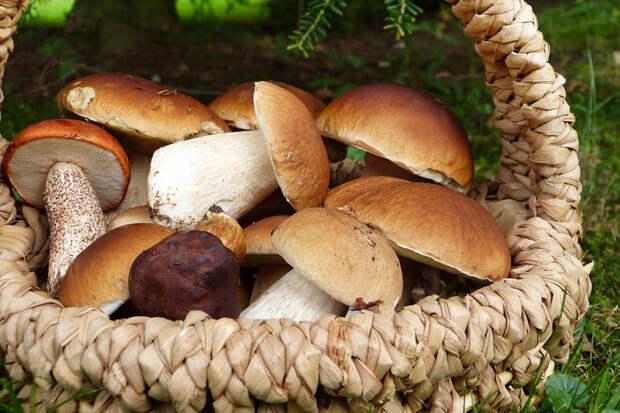В Чернобыле у грибников изъяли 40 кг радиоактивных грибов