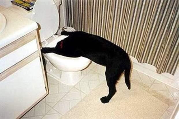 ТЕРЕМОК. Что раздражает вашу собаку