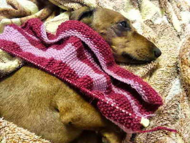 Воротник свитера для собаки