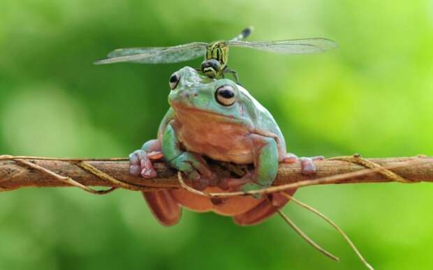 Лягушка и стрекоза