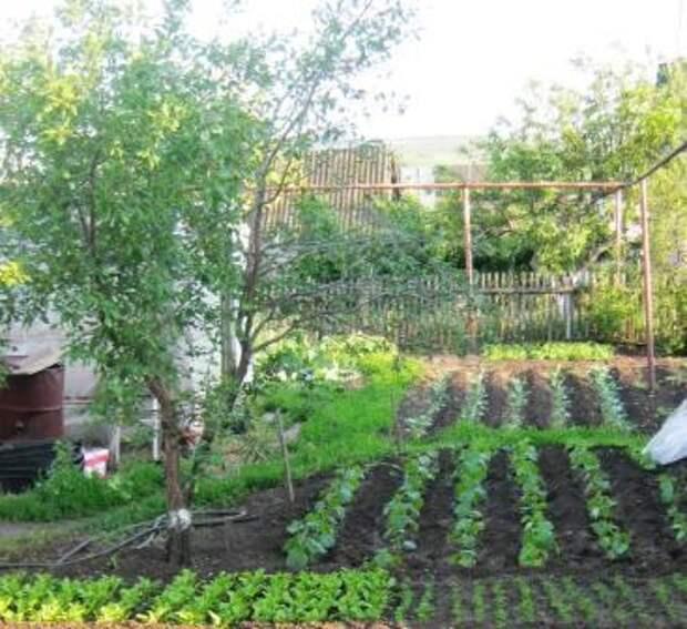 Полезные советы от огородников и садоводов