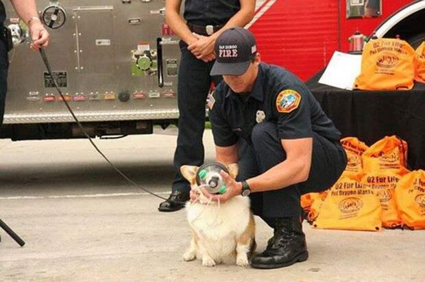 Пожарные бригады приобретают кислородные маски для животных