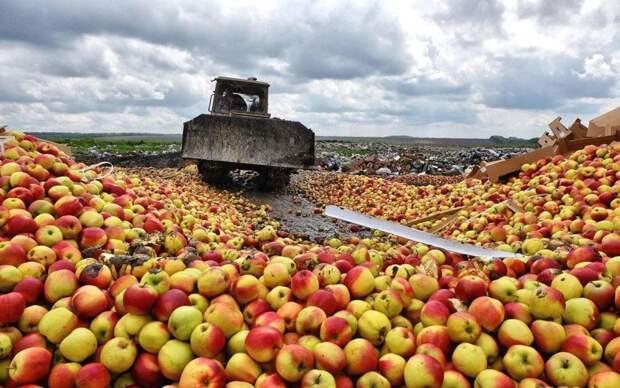 «Москва размазала Варшаву»: поляки капитулировали перед Россией в «яблочной войне»