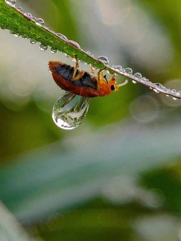20-летний индиец делает невероятные фото насекомых нателефон