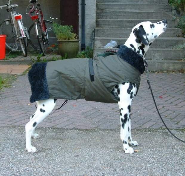 Тёплая попона-пальто для собаки выкройка
