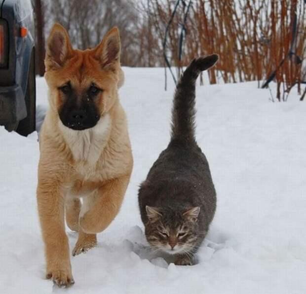 Забавные фотографии дружбы собак и кошек