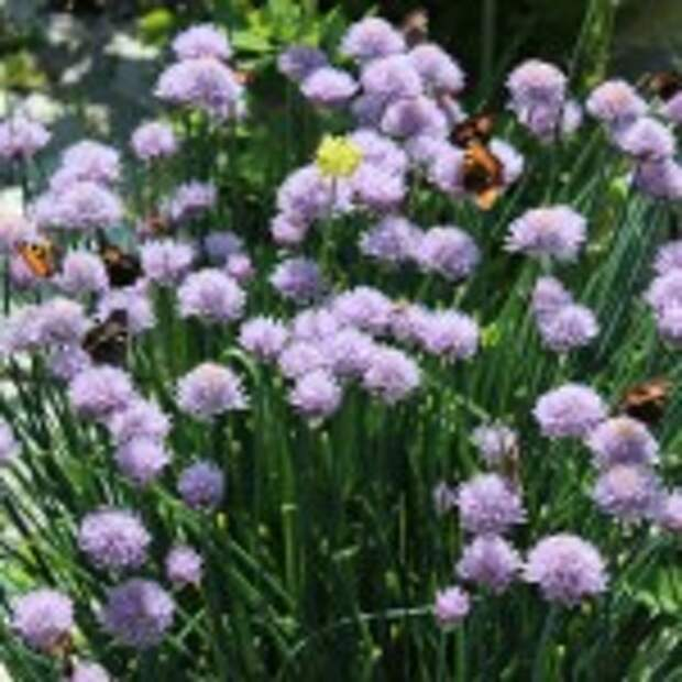 Сад — огород на 27 июня