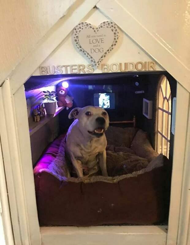 Дом для зверя (DIY)