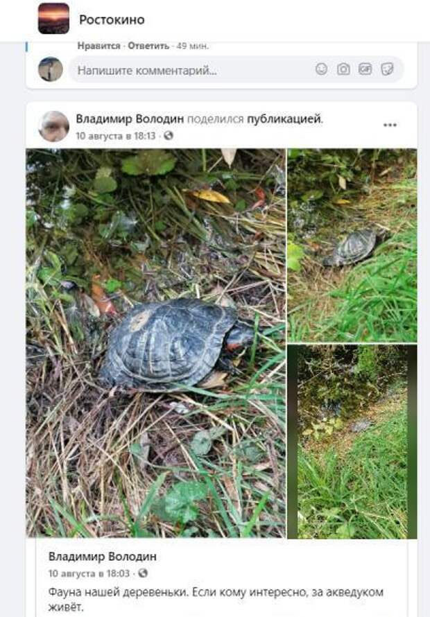 Фото дня: красноухая черепаха поселилась за акведуком
